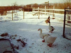 Juniors Farm 1982